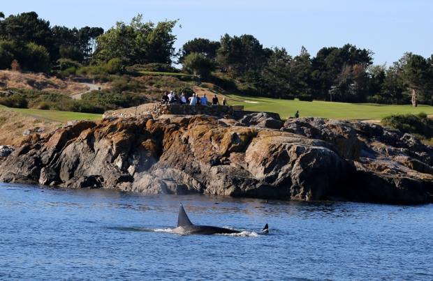Golfers Watching Whales in Victoria