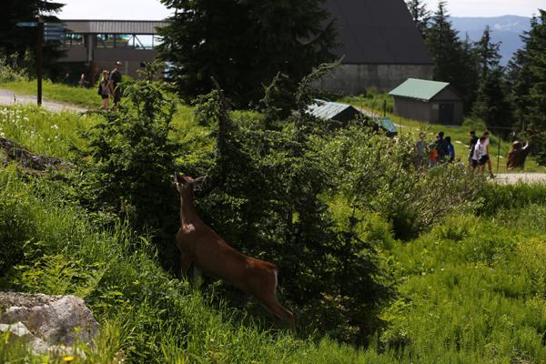 Summer Activities West Coast Living Canada