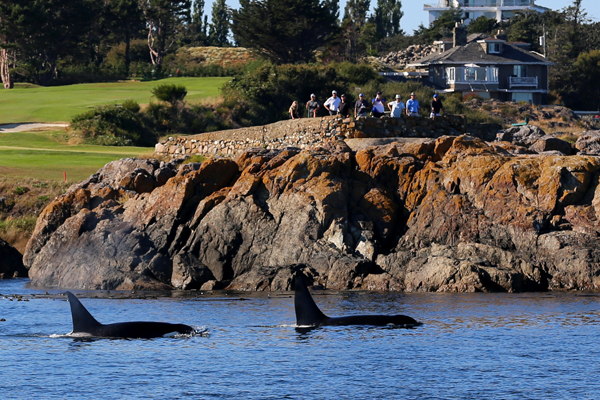 Whale Watching West Coast Living Canada